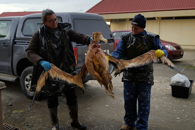 Dean Whaanga (left) and Bubba Thompson holding up the albatross that is about to be plucked.