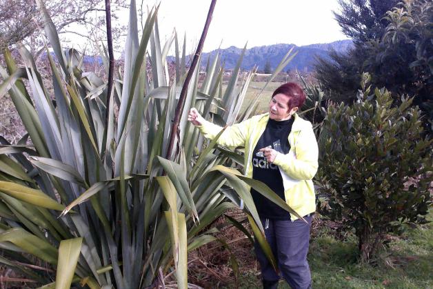 Irene teaching harvesting techniques.