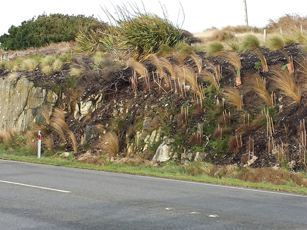Native plantings at the entrance to Bluff.