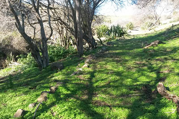 One of the lesser known 'structures' on the marae that influences movement – the old sled track that went over the hill from the marae to Pipikaretu Beach.