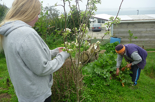 Peter Asher, picking fresh rhubarb while Erena Russell-Harris admires the blossoming pear tree.