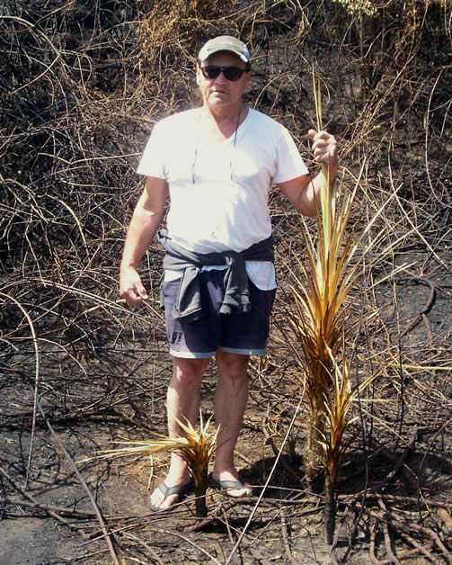 Rewi Couch standing next to a cluster of tī kōuka (cabbage trees) destroyed by the fire. Photo by Brian Downey.