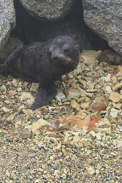 Seal at Colac Bay.