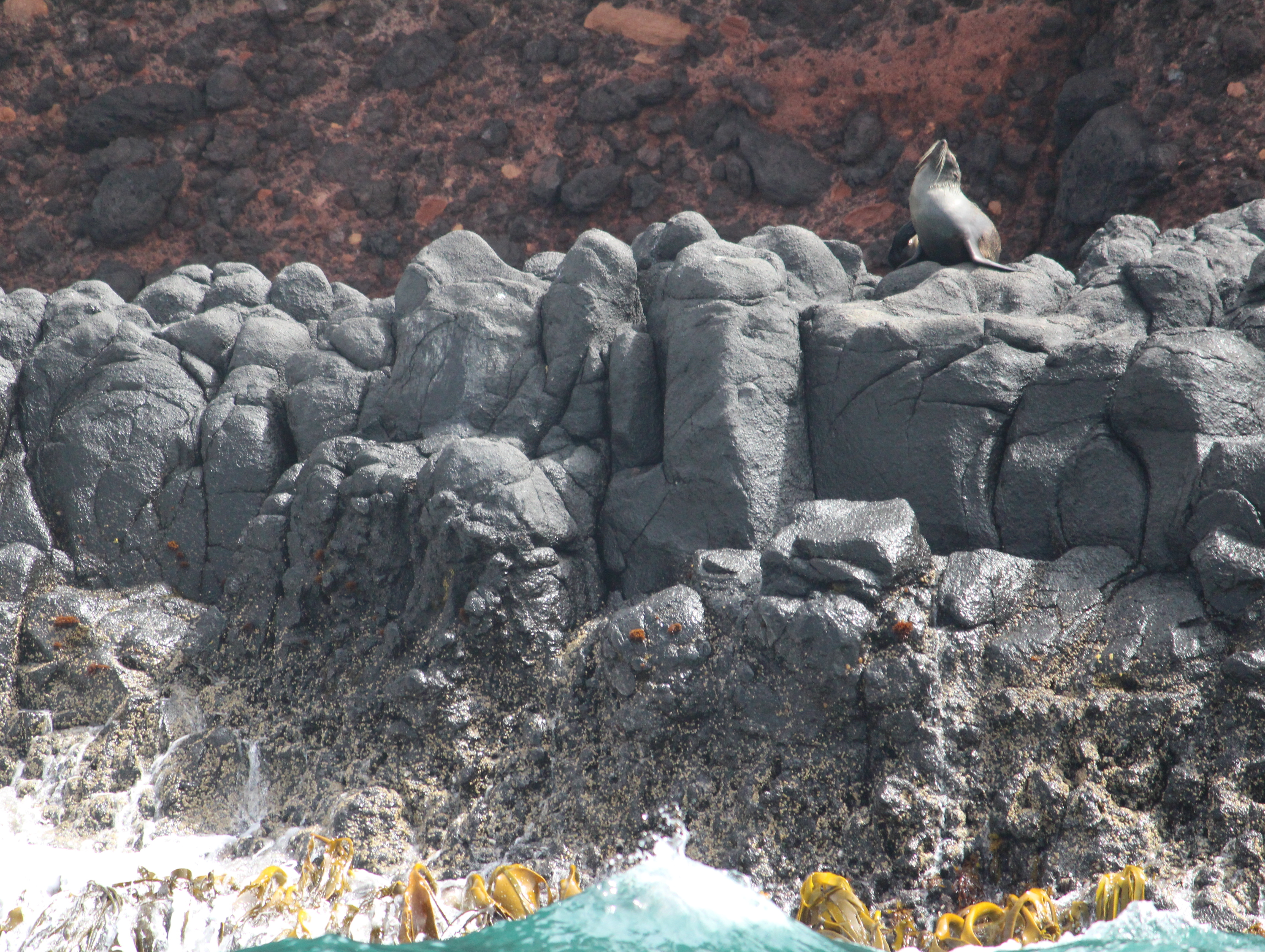 Seals from the trip out to sea.
