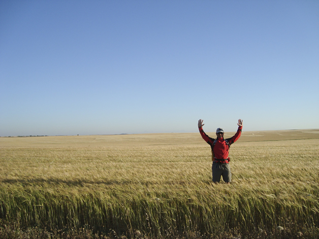 Standing tall in a wheat field.