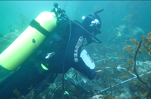 State of the Takiwā monitoring team member undertaking a benthic habitat and pāua survey.