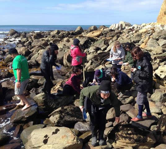 Right; Students carry out Marine Meter Squared surveys for the East Otago Taiapure Committee.