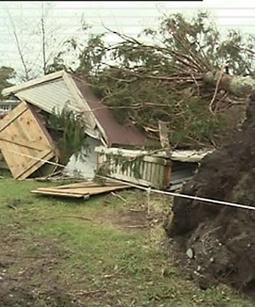 Tree uprooted in the storm, crushes building in Whataroa.