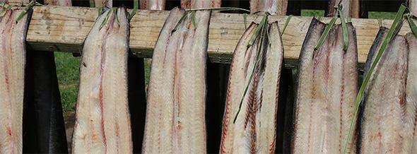 Tuna being hung to dry.