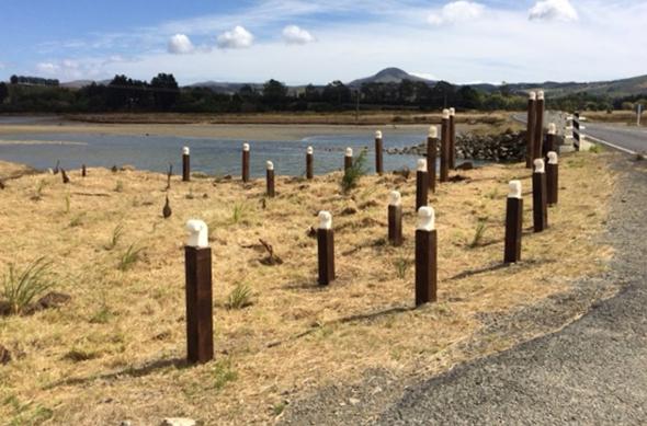 Twenty pou installed at the waka landing site at Orbell's Crossing, Karitāne.